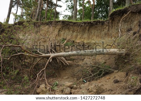 Slide Soil Erosion, Row of Trees Exposed to Seaside Cliff Face Erosion with Crumbling Earth and Dirt, Climate Change Sea Levels, Uprooted Trees Lying on Sand Cause by Coastal Erosion, Landslide #1427272748