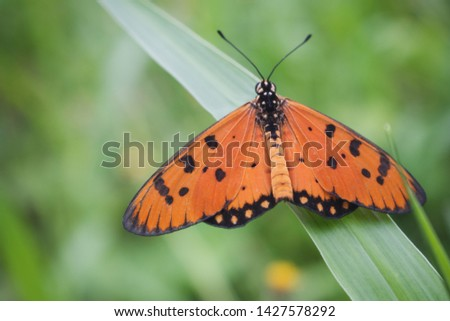 Orange butterfly on the grass in the garden #1427578292