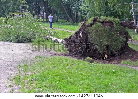 a man takes pictures on a smartphone the result of the storm. A fallen tree storm. Hurricane flood and wind.