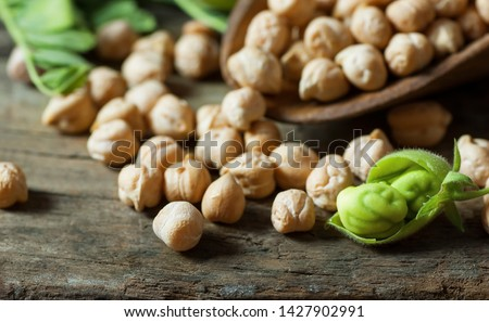Uncooked dried chickpeas in wooden spoon with raw green chickpea pod plant on wooden table. Heap of legume chickpea background #1427902991