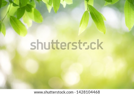 Close up green leaf nature on blurred greenery background with copy space under sunlight using as a wallpaper, ecology, fresh concept. #1428104468