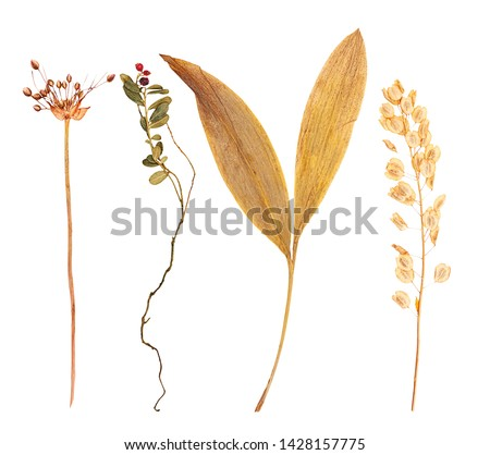 Set of herbarium wild dry pressed flowers and leaves, isolated #1428157775
