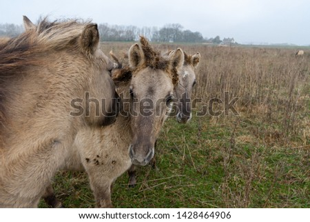 Three wild horses standing together #1428464906