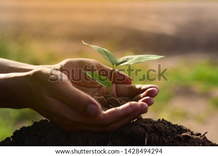 Hand care seedling growing plant in the soil and light of the sun with planting trees to deduct global warming #1428494294
