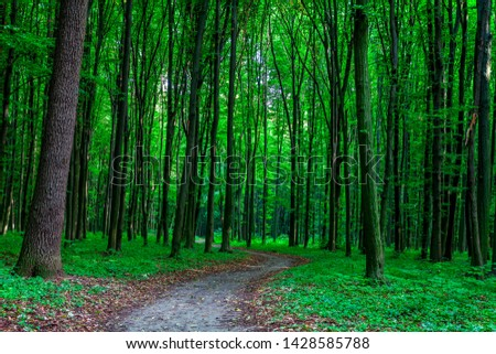Forest trees. nature green wood sunlight backgrounds #1428585788