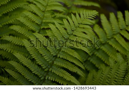 A fern is a member of a group of vascular plants that reproduce via spores and have neither seeds nor flowers. Royalty-Free Stock Photo #1428693443