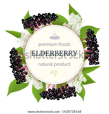 Elderberry Round Circle badge with twig, berries, leaves, flowers. Sambucus. black elder plant, European elderberry. Vector illustration. For food, medicine, cosmetology syrups drinks tea #1428728168
