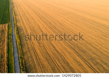 Areal view of crop fields in sunny summer day