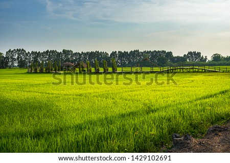 Beautiful view of rural green rice field landscape against blue sky with clouds, Nakhon Nayok, Thailand. #1429102691