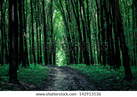 beautiful green forest #142913536