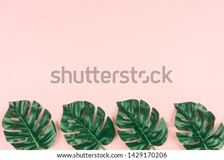 Tropical leaves Monstera on Pastel pink background. Flat lay, top view #1429170206