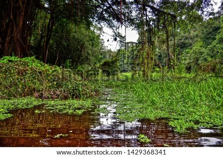 Amazon jungle on the Nanay River in Peru. #1429368341