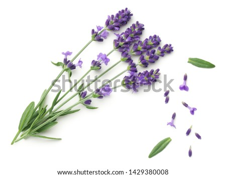 Lavender flowers isolated on white background. Top view, flat lay #1429380008