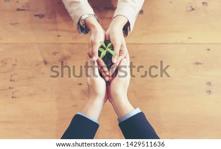 Hands adult business  partner and Team Work harmony Cupping young Plant and seeding Nurture grow Environmental and reduce global warming help earth, top view. Ecology sustainable Concept #1429511636