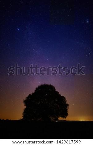 Starry sky with single tree as silhouette #1429617599