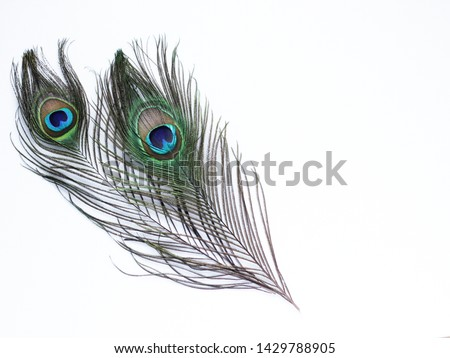 Clothing and home decoration. Peacock feathers on white background. #1429788905