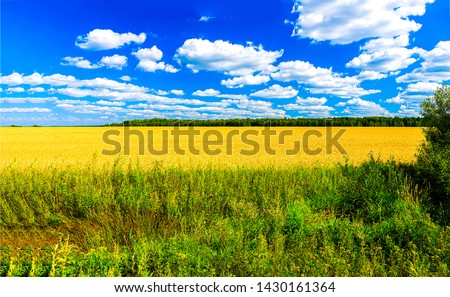 Summer agriculture field horizon landscape. Agriculture field in summer. Cloudy sky over summer agriculture field. Summer agriculture field horizon panorama #1430161364