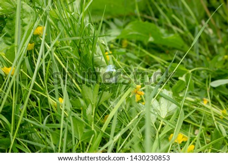 Green grass in summer and yellow flowers  #1430230853