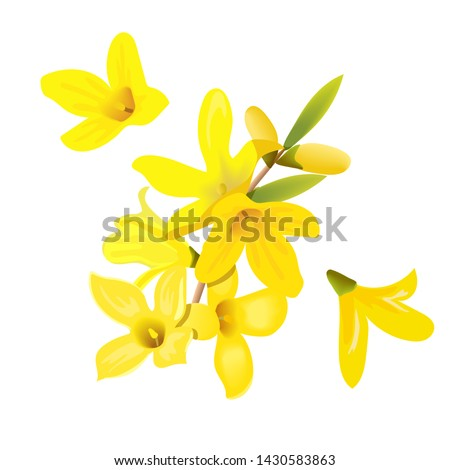 Forsythia suspensa flowers branch and flowers. Card template. blossoming yellow spring tree. Golden Bell, flowers boxing. Vector illustration. For prints, poster, flyer, flier, text copy space #1430583863