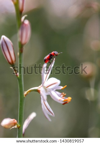 Macro photo of a red insect perched on a white flower #1430819057