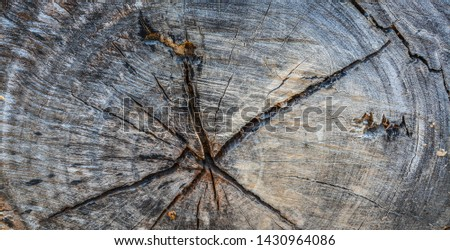 wood timber Background  Timber texture  #1430964086