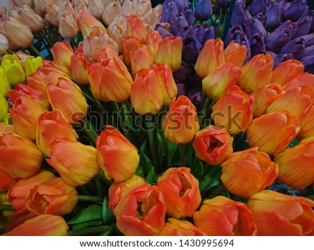 Colorful bouquet of tulips. Close up photo of flowers #1430995694