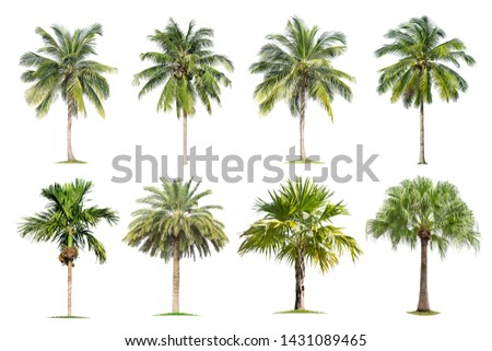 Coconut and palm trees Isolated tree on white background , The collection of trees.Large trees are growing in summer, making the trunk big. #1431089465