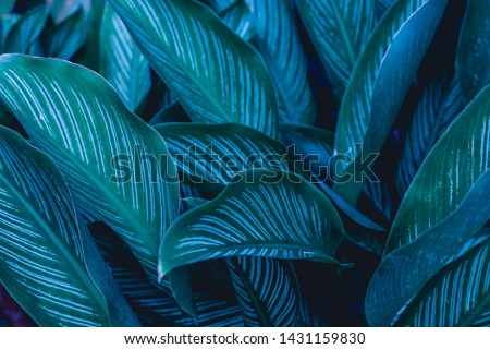 green leaves nature  background, closeup leaves texture, tropical leaves #1431159830