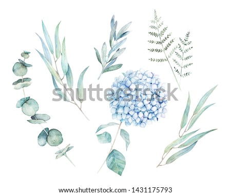 Watercolor greenery set. Botanical winter illustration with eucalyptus branch and blue hydrangea. Vintage hand drawen plant