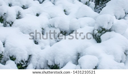 Cool nature winter background with branches of bushes under the snow. #1431210521