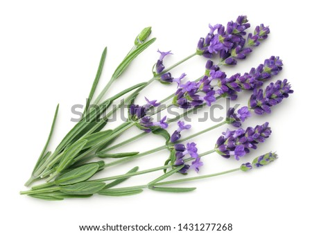 Lavender flowers isolated on white background. Top view, flat lay #1431277268