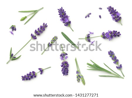 Lavender flowers isolated on white background. Top view, flat lay #1431277271