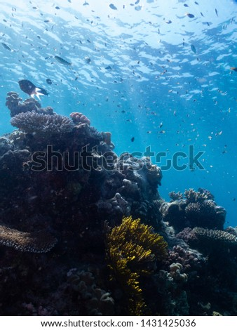great barrier reef coral and fish #1431425036