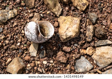 Close-up of golden apple snail's shell and rocks scattered on the ground during ebb tide at a national park. #1431498149