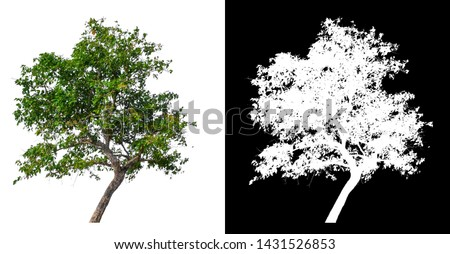 isolated single tree on white background with clipping path and alpha channal #1431526853