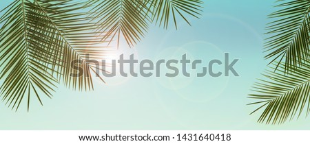Palm branches over blue sky