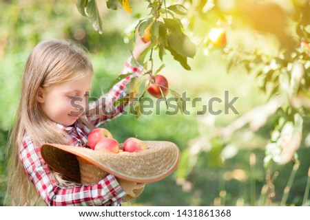 Girl with Apple in the Apple Orchard. Beautiful Girl Eating Organic Apple in the Orchard. Harvest Concept. Garden, Toddler eating fruits at fall harvest. Apple picking. #1431861368