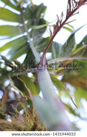 close up photo of tree with blue sky in background decaf #1431944033