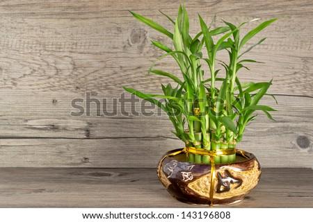 Bamboo in vase #143196808