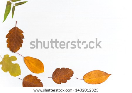 Autumn composition. Pattern made of dried leaves, birch branches on white wooden background. Autumn flat background. Flat lay, top view #1432012325