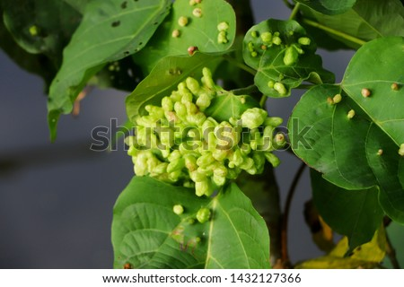 Some unknown unknown plants do not know the name of green.. #1432127366