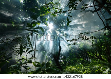 The picture of smoke in the forest.