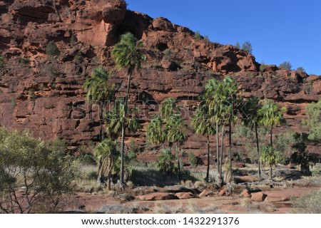 Palm Valley in Finke Gorge National Park West MacDonnell Ranges Northern Territory Australia Royalty-Free Stock Photo #1432291376