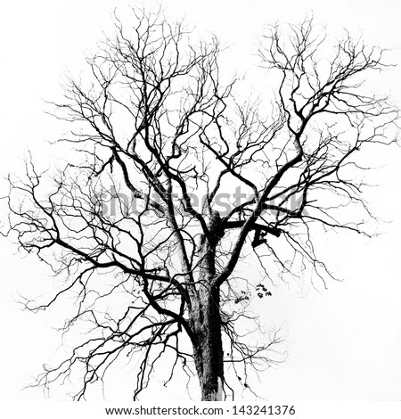 Dead Tree without Leaves Royalty-Free Stock Photo #143241376