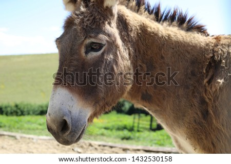 Photo of Donkey in the foreground. Farm animal #1432530158