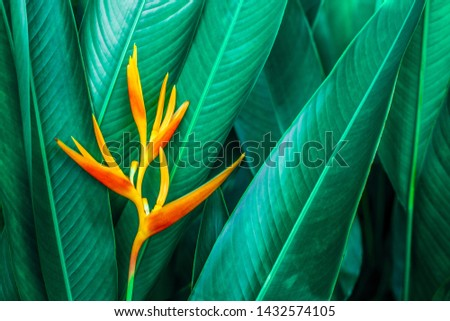 colorful exotic flower on dark tropical foliage nature background, tropical leaf #1432574105