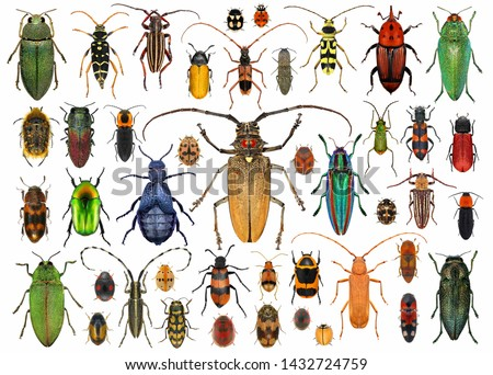 Beetles (Coleoptera). Set of beetles isolated on a white background  #1432724759