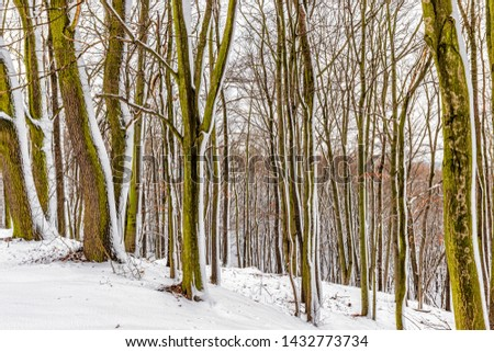 Beautiful winter landscape in the snowy forest, a trip to the south Poland in January. #1432773734