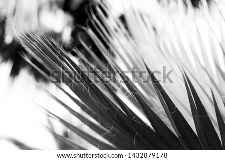 palm tree with large leaves against the blue sky #1432879178
