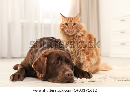 Cat and dog together on floor indoors. Fluffy friends #1433171612